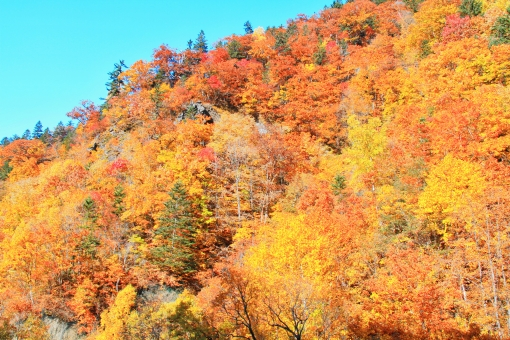 定山渓 紅葉 見ごろ 美しい 奥座敷 きれい 綺麗 息をのむ 色鮮やか 極彩色 うっとり 青空 秋 秋晴れ 札幌 北海道