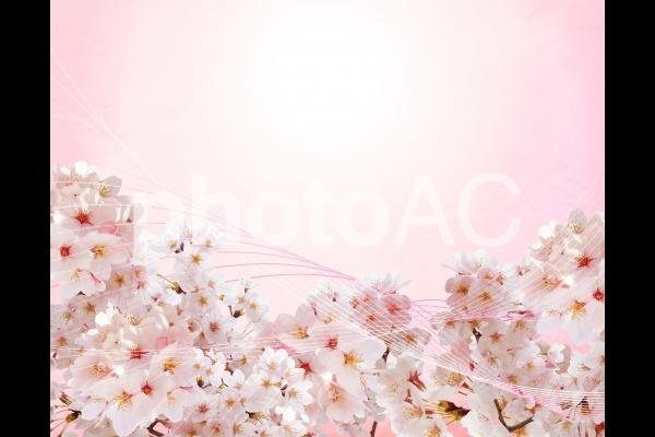 ピンクの和紙背景と桜の流線型素材の写真