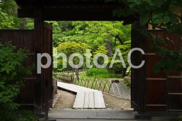 夏の日本庭園の写真