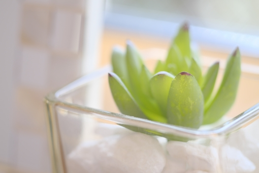 多肉植物 観葉植物 ニッチ インテリア 緑 植物 ガラス 横位置 ソフト 余白 窓辺