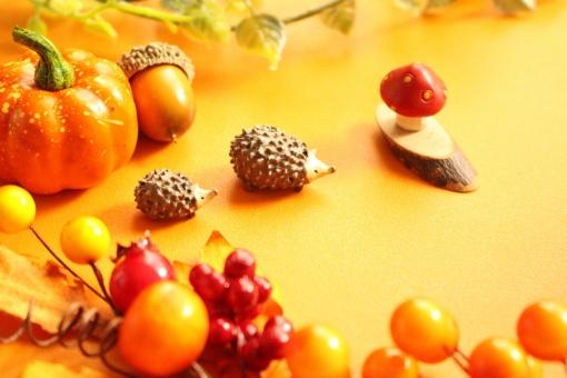秋のイメージの写真