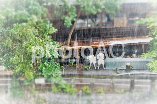雨4の写真