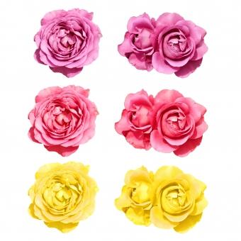 薔薇セット4の写真