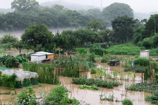 畑 水害 大雨 雨 豪雨 冠水 水没 災害 水 川 注意報 冷夏 被害 野菜畑 野菜 農家 台風 ゲリラ
