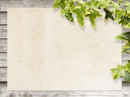 背景 素材 白 ホワイトフレーム 枠 紙 エコ エコロジー 新緑 ピュア 葉脈 アンティーク レトロ 板 木 ペイント 塗装 文字スペース テキストスペース コピースペース デザイン素材 バック バックグラウンド カフェ レストラン ショップ 住宅 インテリア 木目 天然 ナチュラル 自然 植物 緑 diy 壁 アイビー テクスチャ ツタ 蔦 つた 葉 葉っぱ 爽やか さわやか