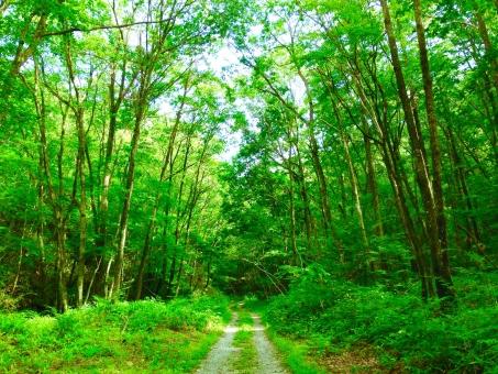 森の小道 森 林 小道 木 木々 緑 木漏れ日 こもれ日 木洩れ日 散歩 涼しげ 夏 初夏 木陰