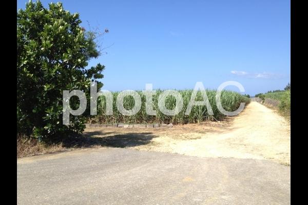 島の畑の写真