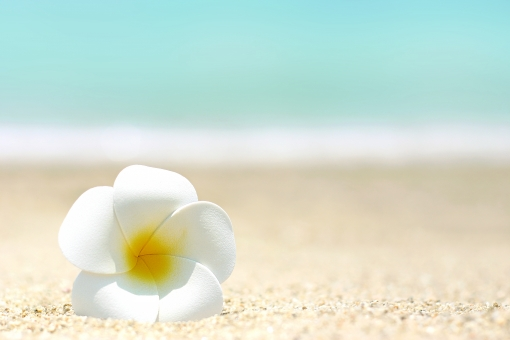 季節 夏 海 海辺 海岸 浜辺 砂浜 海水浴 夏休み 砂 波 花 プルメリア 泳ぐ 風景 景色 自然 南国 背景 青 白 ブルー サマー まぶしい