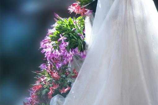 自然 植物 レース 白いレース 花 生け花 春 初夏 夏 春の花 夏の花 ブーケ 創作生け花 ポストカード 待ち受け画像 コピースペース バックスペース 屋内 インドア 背景素材 背景 花いろいろ デザイン素材 グラフィック素材 爽やかイメージ 光を浴びて 光透過光 新緑 若葉 カラフルな花 ウエーブイメージ テクスチャー