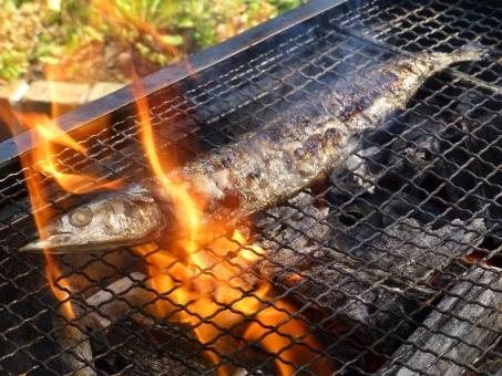 さんま サンマ 秋刀魚 秋 秋の味覚 魚 さかな 網焼き 網 炭火 炭火焼 炎 火 焼き魚 fish 焼き 焼く 旬 味覚 アウトドア 炭焼き fire BBQ バーベキュー