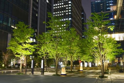 東京 丸の内 日本 ビル街 ビル群 ビジネス街 樹木 植物 木 新緑 ライトアップ 広場 休憩所 憩い オアシス オフィス街 オフィス オフィスビル 照明 サラリーマン 夜 夜景 商業