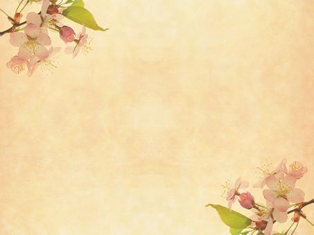 花 桜 サクラ さくら 花びら 植物 自然 春 空間 余白 テクスチャ 質感 背景 背景素材 バックグラウンド テキストスペース コピースペース 枠 フレーム 暖かい ナチュラル 花柄 花模様 桜の花 桜柄 ベージュ 葉 葉っぱ 新緑 若葉 飾り枠 加工 写真加工
