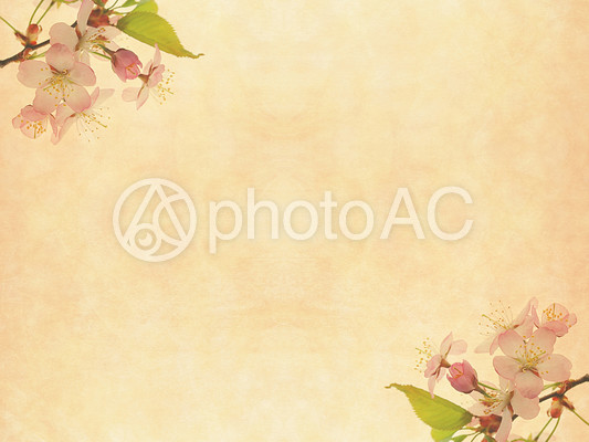 桜のナチュラルテクスチャ16の写真