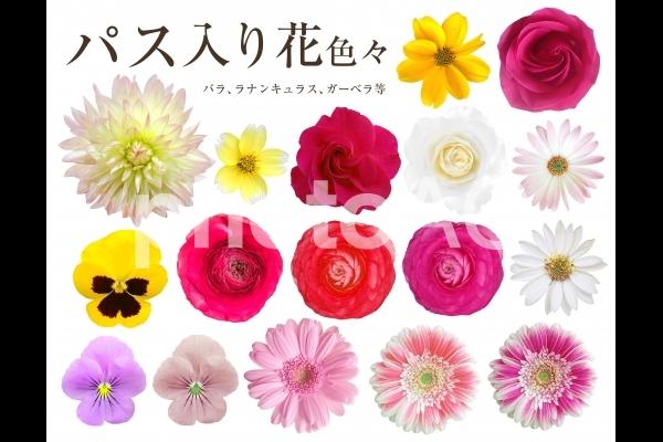 花色々の写真