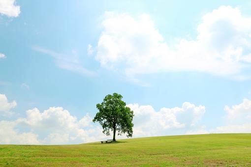 丘に立つ木の写真