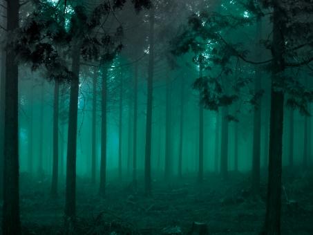 森 怪奇 ミステリー ホラー 恐怖 樹木 樹海 杉 杉林 樹林 檜 スギ すぎ ヒノキ 幻想的 幻想 山 山林 木 自然 エコロジー エコ 癒し スピリチュアル ヒーリング eco 自然 霧 濃霧 森林