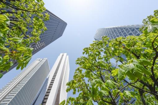 新緑 樹木 木 葉 若葉 グリーン 緑 青空 青 快晴 ビル街 ビル ビル群 オフィス街 オフィスビル 高層ビル 東京 新宿 日本 商業 ビジネス街 植物