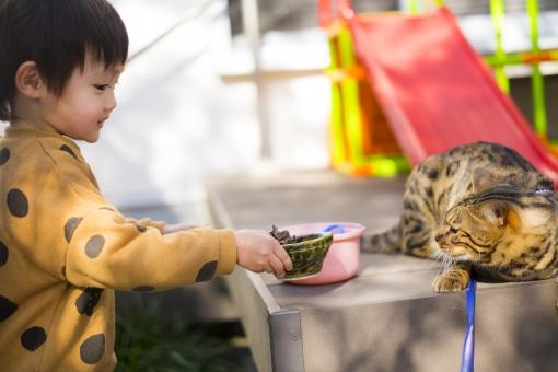 男子 日本人 かわいい 子供 男の子 幼児 こども 無邪気 散歩 ペット 男児 子育て ネコ 猫 ねこ 野生 ベビー 育児 ヒョウ柄 自由 お気に入り ベンガル ワイルド リード おままごと 園児 やんちゃ にゃんこ ベンガル猫 美しい模様 2歳児 警戒する猫 きれいな模様 猫のいる部屋 猫のいる生活 二歳児 猫と子ども 美しい猫 きれいな猫 珍しい猫 猫のいる暮らし 怖がる猫 かっこいい猫 猫の習性 野生味 猫の動き 柔らかい髪 子供モデル 嫌がる猫 子ども嫌い