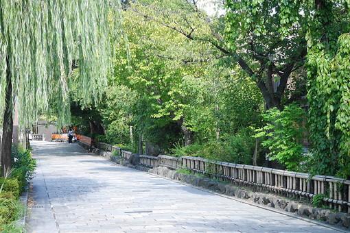 京都 きょうと 古都 日本 京都府 京都市 関西 歴史 旅行 風情 情緒 景色 風景 世界遺産 ユネスコ 世界文化遺産 町並み 街並 伝統 歴史 旅行 観光 和 石畳 道 自然 樹木 植物 木 柳