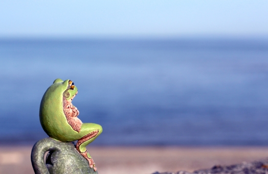 井の中の蛙 大海を知る の写真
