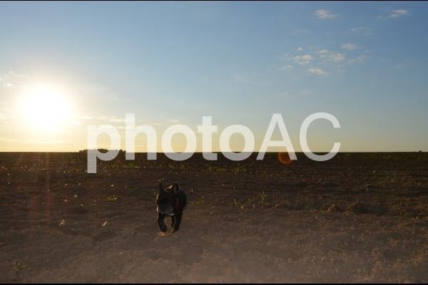 フレンチブルドッグと太陽の写真