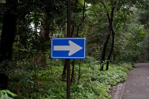 屋外 野外 森 林 雑木林 森林 道路 道 舗装路 標識 サイン 一方通行 矢印 看板 緑 茂る 樹木 木々 木 右 左 指示 目印 青 草花 葉 植物 交通 道標 サインボード