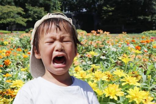余暇 夏 子供 幼児 晴れ 子ども 表情 公園 日常 自然 子育て 泣く 育児 秋 涙 うるさい 緩和 わがまま 癇癪 やんちゃ 大泣き 泣き顔 3歳 騒ぐ イヤイヤ期 屋外で