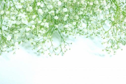 カスミ草に関する写真写真素材なら写真ac無料フリー