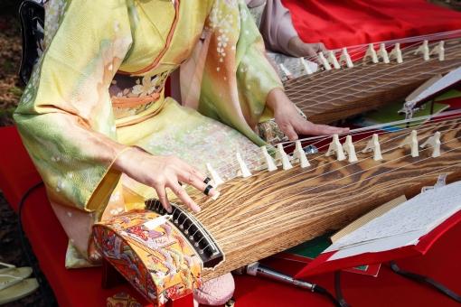 琴 楽器 箏 こと 日本 人物 女性 人 弾く 手 ゆび 指 引く 和楽器 弦 弦楽器 演奏 和 音楽 着物 和服 和琴 爪 伝統 文化 日本文化 伝統楽器 木製 趣味 ピック 優雅 優美 柱 琴柱 木目 木 アップ クローズアップ 屋外 野外 譜面