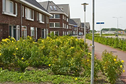 オランダ Holland アムステルダム 欧州 アパート 住居 家々 ホーム ハウス ローハウス 長屋建て 連なる 三角屋根 屋根裏 建物 レンガ造り 赤レンガ 街並み 窓 住宅街 道路脇 ガーデン 植物 街灯 高級住宅街