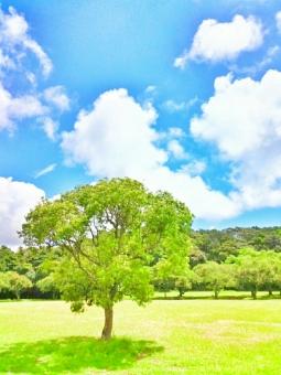 晴れ 晴天 青空 青い ブルー そら 空 スカイ スカイブルー みずいろ 水色 太陽 ひかり 輝き きらきら 雲 もくもく 夏 なつ サマー さわやか 爽やか 爽快 気持ちいい リフレッシュ 癒し 田舎 のどか ゆっくり 散歩 さんぽ 風 木々 木 林 森 葉 はっぱ 草原 みどり 緑 グリーン 綺麗 きれい キレイ 美しい ビューティフル 自然 しぜん 風景 景色 四国 高知