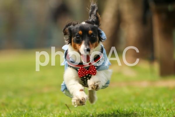 走る犬の写真
