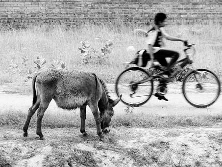 アート 芸術 美術 生き物 動物 食べる 草 草原 植物 成長 育つ 伸びる 原っぱ 野草 野生 雑草 葉 葉っぱ 塀 レンガ 自転車 走る 交通 早い 漕ぐ 人物 運転 白黒 モノクロ ねずみ色 灰色 グレー 風景 景色