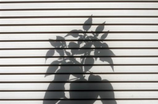 外国風景 海外 国外 外国 クロアチア 東ヨーロッパ ヨーロッパ 東欧 鉢植え 花 草花 葉 シルエット 影 影絵 ブラインド 横縞 ボーダー 植物 背景 背景素材 コピースペース テキストスペース 明るい 白