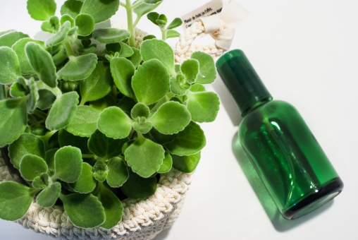 植物 ハーブ アロマ スキンケア ヘアケア ボトル フレグランス ボディケア スプレー オーガニック 美容 健康 香り アロマティカス 緑