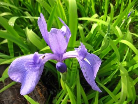 5月の花に関する写真写真素材なら写真ac無料フリー